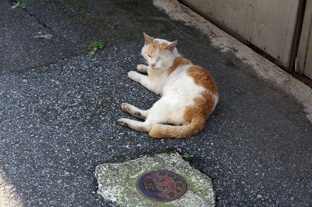 北千住駅西口の猫 2015.7.12