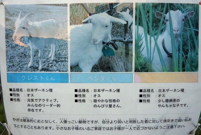 「新川崎地区整備事業 F地区」 2015.10.17