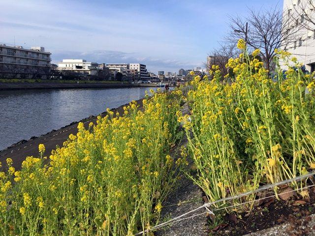 「しながわ花海道」勝島運河 2016.2.14