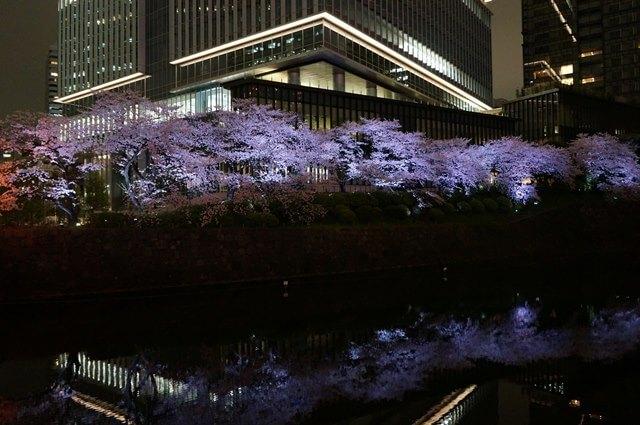 東京ガーデンテラス紀尾井町の夜桜 2016.4.5
