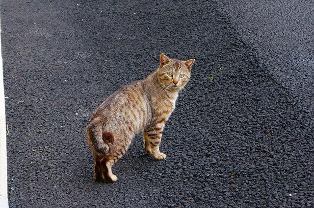 蒲田の猫 2016.4.23