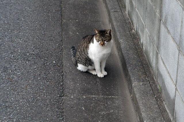 糀谷の猫 2016.4.23